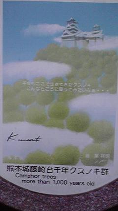 藤崎台クスノキ
